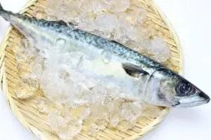 青魚とはどんな魚のこと?青魚の種類や特徴を一覧でご紹介! | 気になること,知識の泉