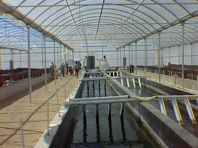 Texas Pond Construction