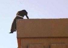 عاجل: إنقاذ فتاة حاولت رمي نفسها من أعلى منزل الأسرة بأيت ملول