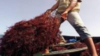 درب الشلح يهتز على وقع جريمة قتل قاصر لشقيقه بسبب الطحالب البحرية