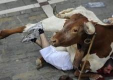 فاجعة: ثيران هائجة تدهس قيدوم الجزارين بالمذبح البلدي وترديه قتيلا
