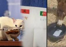 تنبؤ عراف المونديال بفوز المغرب على البرتغال يثير سخرية عارمة في الفايسبوك