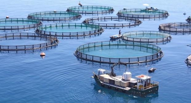أكادير : معطيات طبيعية ومناخية توفر مستقبلا واعدا لمشاريع تربية الأحياء البحرية بجهة سوس ماسة