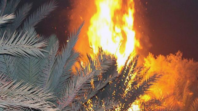 النيران تأتي على واحة آيت منصور وتلتهم سيارة بتافراوت