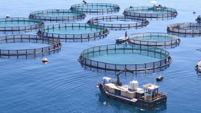 جهة سوس ماسة تطلق 24 مشروعا لتربية الأحياء البحرية
