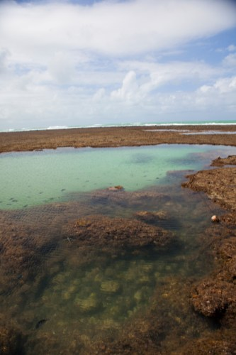 The exposed reef at low tide.
