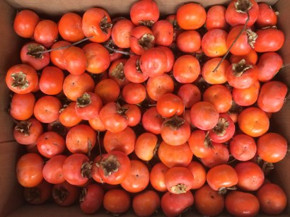 Homegrown Japanese persimmons!