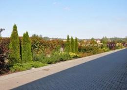zieleń przed firmą