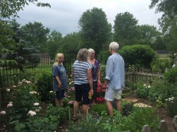 More garden talk in the herb garden