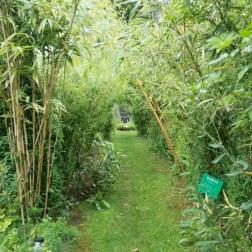 Bamboo walk-1