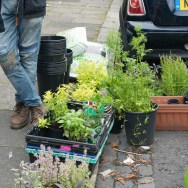 street-herbs-1