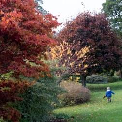 autumn-garden-1
