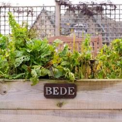 bedes-bed-1