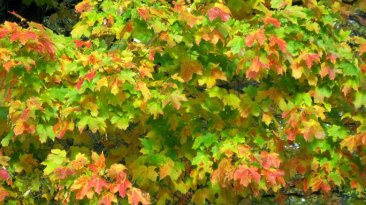 Fall-Color-2-large