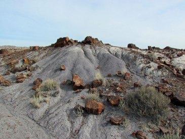 Arizona-009-large