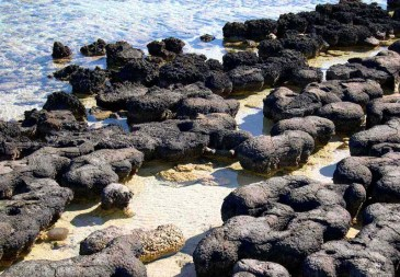 Stromatolites-Sharks-Bay-big