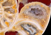 ammonite-3-big