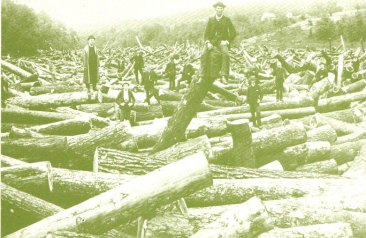 logging-postcard-2-big
