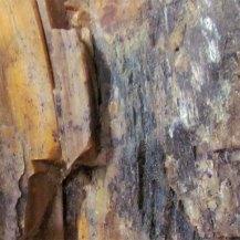petrified-wood-2-large