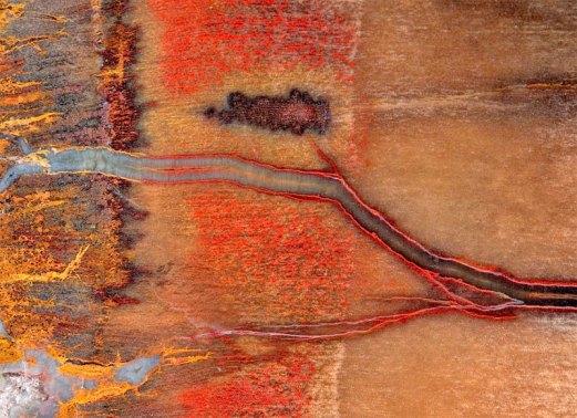 petrified-wood-4-large