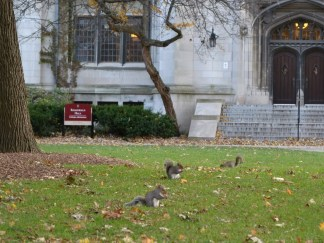 The main quad is literally filled with mischievous squirrels. Entertainment for hours.