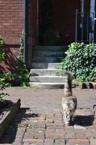 savannah georgia cat