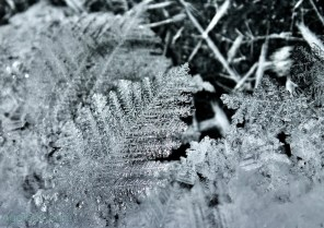 Ice Crystals closeup nature art photography from AgathaO.com