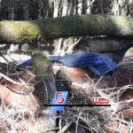 Homem morre esmagado por árvore na área rural de Cascavel