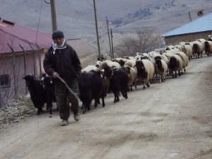 Ağcaşar Köyünün Tarihi