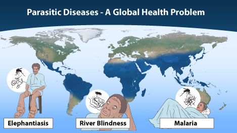 The 2015 Nobel Prize in Physiology or Medicine awards discoveries regarding novel therapies for some of the most devastating parasitic diseases: River Blindness, Lymphatic Filariasis (Elephantiasis) and Malaria. The distribution of these diseases is quite similar and is collectively shown in blue on the world map. (from http://www.nobelprize.org/nobel_prizes/medicine/laureates/2015/press.html)