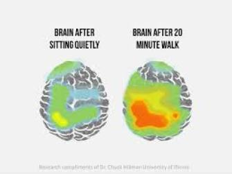 brain before and after exercise
