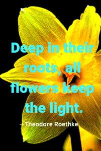 """A yellow flower against a black background, quote """"Deep in their roots, all flowers keep the light"""" -Theodore Roethke"""