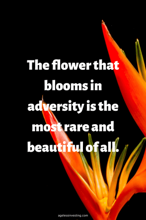 "A picture of an orange flower against a black background, quote ""The flower that blooms in adversity is the most are and beautiful of all"""