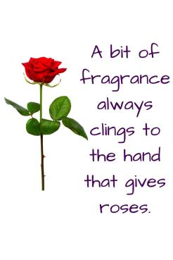"A picture of a single red rose, quote ""a bit of fragrance always clings to the hand that gives roses"""