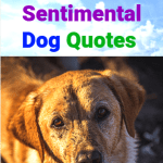 Sentimental Dog Quotes For the Master of Unconditional Love PM