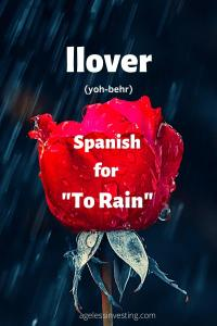 """A picture of a red rose in the rain, headline """"llover, Spanish for """"to rain"""""""