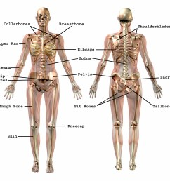 common bone names effortless movement bone name chart bone name diagram [ 3600 x 3396 Pixel ]