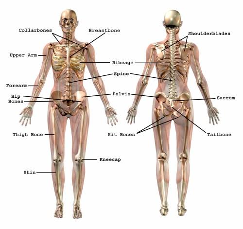 small resolution of common bone names effortless movement bone name chart bone name diagram