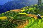 Voyage Yen Bai et decouverte ses sites touristiques, Mu Cang Chai