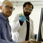 Científicos argentinos de la UNLP determinaron por qué el coronavirus evade las respuestas inmunes