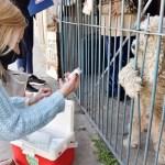 """Malvinas Argentinas: """"Continúan los operativos de vacunación antirrábica en los barrios"""