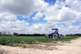 DESARROLLO RURAL Y AGROPECUARIO (2)