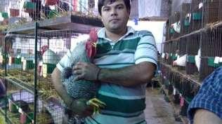 Avicola Sabado (31)