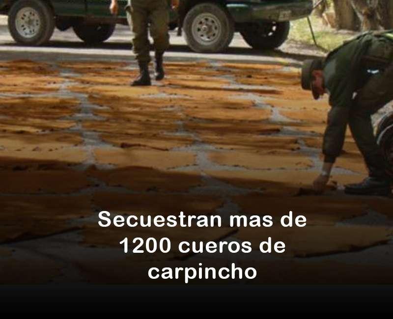 Más de 1200 cueros de carpinchos secuestrados