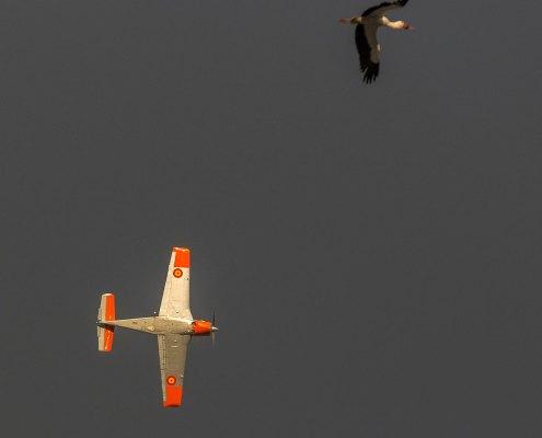 Avión y Gigüeña