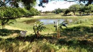 Animal no parque