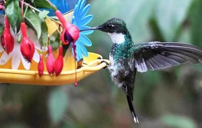 """Arranca una campaña mundial para hacer un """"conteo"""" de aves de jardín, balcones y plazas"""