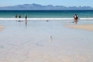 Cape Town Walk - Clovelly Corner