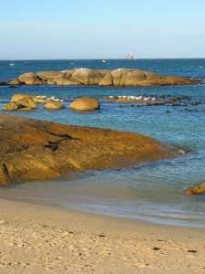 Simon's Town Beach Cape town