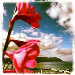 simonstownphotossouthafricaflowers
